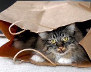 Cat-bag-150-120